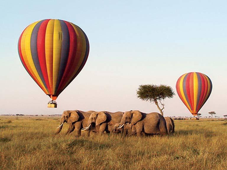 Balloons Above Herd of Elephants
